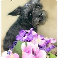 Adopt A Pet :: Sissy - Pascagoula, MS