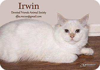 Himalayan Cat for adoption in Ortonville, Michigan - Irwin