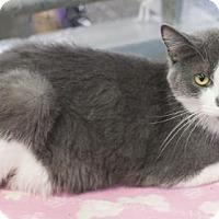 Adopt A Pet :: Rex - Bedford, IN