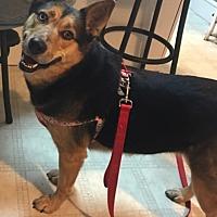 Adopt A Pet :: Katie - Boyertown, PA