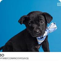 Adopt A Pet :: Erso - Ogden, UT