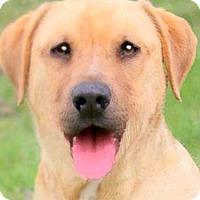 Adopt A Pet :: BO(THE