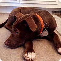 Adopt A Pet :: Yosemite - PENDING - Grafton, WI