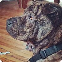 Adopt A Pet :: Maddie - Prescott, ON