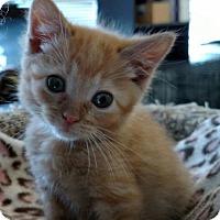 Adopt A Pet :: Peep - DFW Metroplex, TX