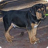 Adopt A Pet :: Spirit - Little River, SC