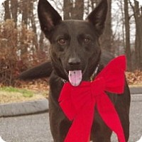 Adopt A Pet :: Happy boy Ike - Baltimore, MD