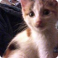 Adopt A Pet :: Evie - Jacksonville, FL