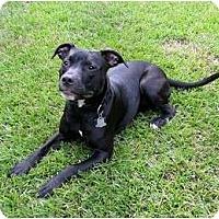Adopt A Pet :: Molly - Washington, NC