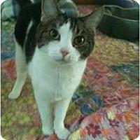 Adopt A Pet :: Bernie - Naples, FL