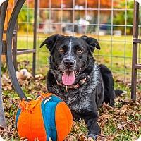 Adopt A Pet :: Destiny - Austin, TX