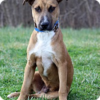 Adopt A Pet :: Philly - Waldorf, MD