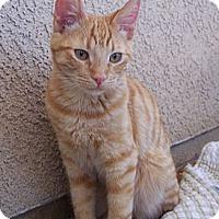 Adopt A Pet :: Robb - Palmdale, CA