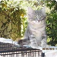 Adopt A Pet :: Squeakie - Los Angeles, CA