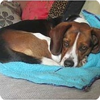 Adopt A Pet :: Peanut - Indianapolis, IN