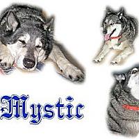 Adopt A Pet :: Mystic - Seminole, FL