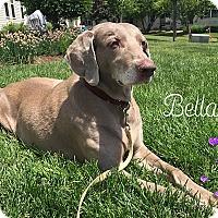 Adopt A Pet :: Bella - Grand Haven, MI