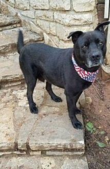 Labrador Retriever Mix Dog for adoption in Brattleboro, Vermont - Tyson