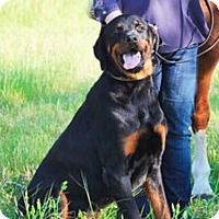 Adopt A Pet :: Zeus - Dallas, TX