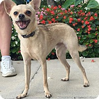 Adopt A Pet :: Frankie - St Louis, MO