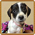 Adopt A Pet :: Cali
