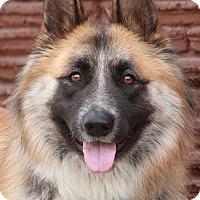 Adopt A Pet :: Juju von Jena - Los Angeles, CA