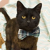Adopt A Pet :: Brutus - Addison, IL