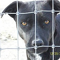 Terrier (Unknown Type, Medium)/Labrador Retriever Mix Dog for adoption in Mexia, Texas - Pearl