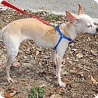 Adopt A Pet :: Ne' Ne' - Umatilla, FL