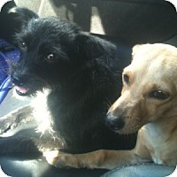 Adopt A Pet :: Clyde (and Bonnie) - Sacramento, CA