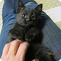 Adopt A Pet :: Maria - Sterling Hgts, MI