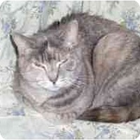 Adopt A Pet :: Princess Leah - Hamburg, NY