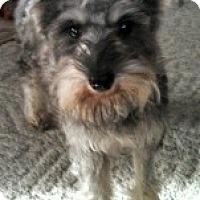 Adopt A Pet :: Maggie - North Benton, OH