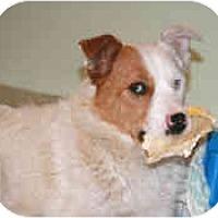 Adopt A Pet :: Pearl - Mesa, AZ