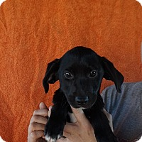 Adopt A Pet :: Miley - Oviedo, FL