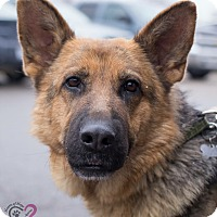 Adopt A Pet :: Jolene - Grand Rapids, MI