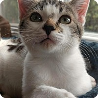 Adopt A Pet :: Frodo - Santa Cruz, CA