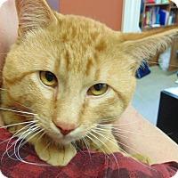 Adopt A Pet :: Aldo - Creston, BC