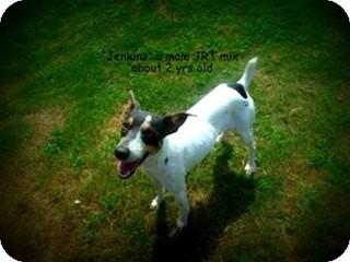 Jack Russell Terrier Mix Dog for adoption in Gadsden, Alabama - Jenkins