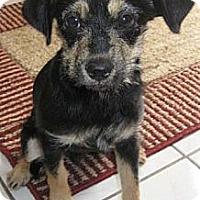Adopt A Pet :: CODY - Mission Viejo, CA