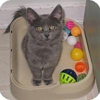 Adopt A Pet :: Corina - Shelton, WA