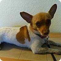 Adopt A Pet :: Roxi - Sacramento, CA