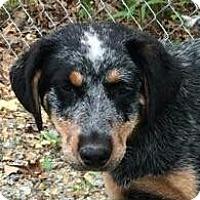 Adopt A Pet :: Cassie - Brattleboro, VT