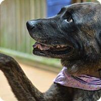 Adopt A Pet :: Xena - Albemarle, NC