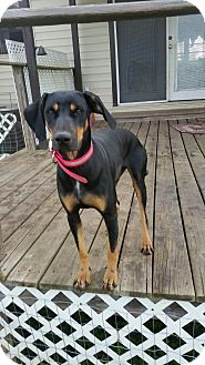 Black and Tan Coonhound Mix Dog for adoption in Dallas, Texas - Vivien