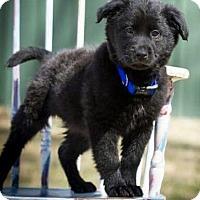Adopt A Pet :: Brewskis ❤! - Saratoga Springs, NY