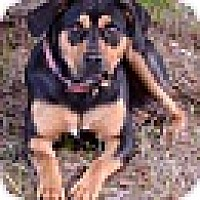 Adopt A Pet :: Molly~18 mo - Branchburg, NJ