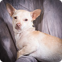 Adopt A Pet :: JOEY - Anna, IL