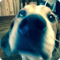 Beagle/Treeing Walker Coonhound Mix Dog for adoption in Ashland, Alabama - Tracker