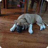 Adopt A Pet :: Zekey - Houston, TX